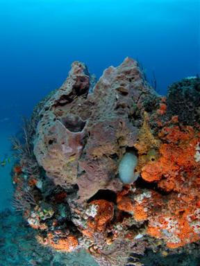 grouper2