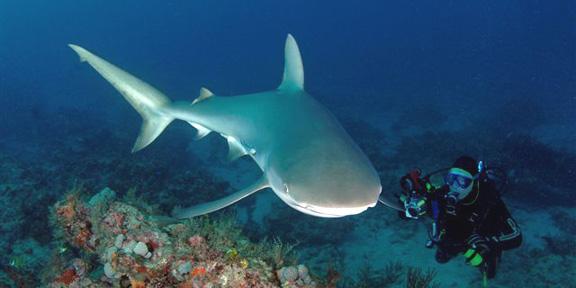 sharkr2