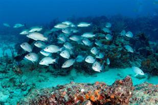 Scuba Diving Delray Beach Snorkeling