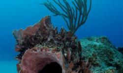 Pompano 3rd Reef